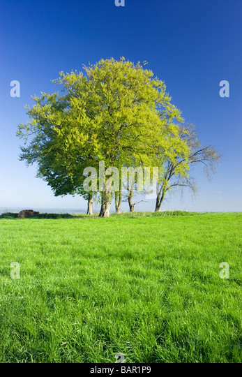 Trees in field of grass. Surrey, UK. - Stock Image