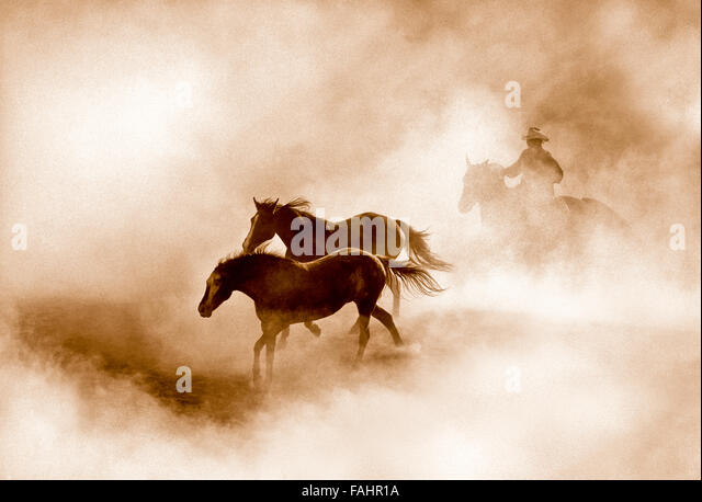 AMERICAN COWBOY, Cowboy rounding up horses in a dusty morning round-up,  Idaho, USA - Stock Image
