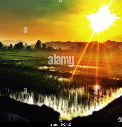 Sunset over paddy field  Thailand - Stock Image
