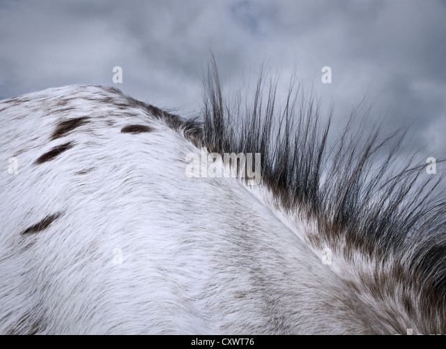 Close up of horse's mane - Stock Image
