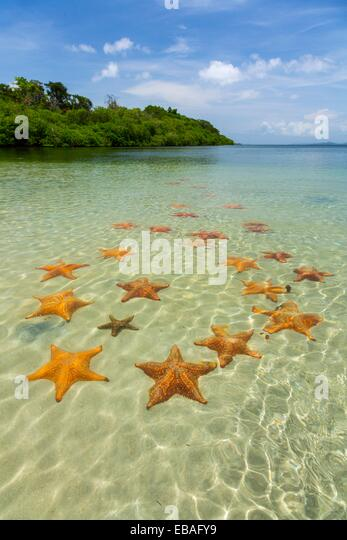 starfish-beach-colon-island-bocas-del-to