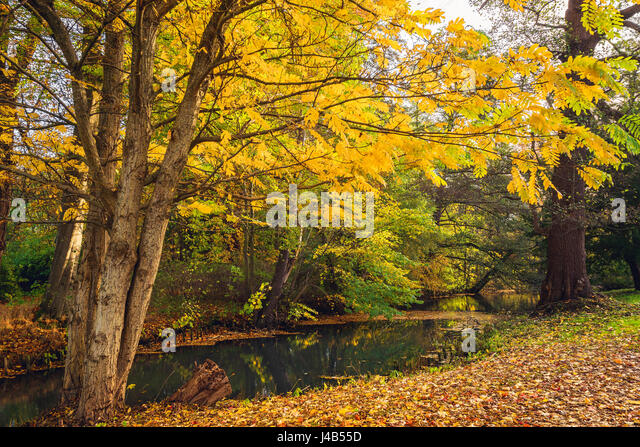 Autumn scenery with yellow leaves on trees near a small river in autumn with reflection of the beautiful autumn - Stock Image