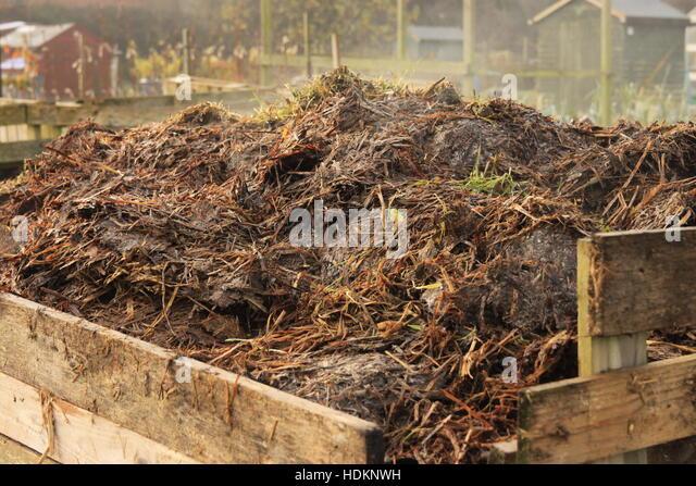 Steaming horse manure in compost bin on allotment garden - organic soil improver fertilizer Beverley, Yorkshire - Stock Image