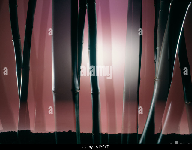 Bamboo composition. - Stock Image