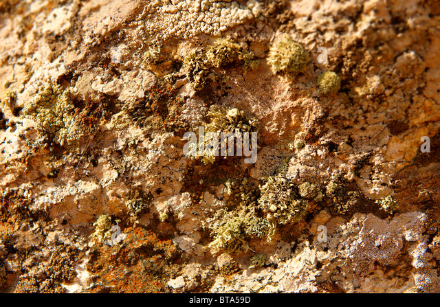 Green Lichens growing on rocks on the Greek Island of Ios. - Stock Image