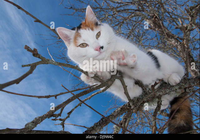 Cat climbing in a tree - Stock Image