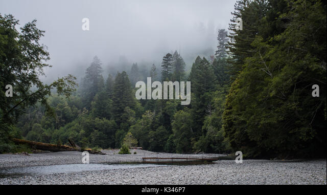 Fog and Trees Surround Mountain Creek with small footbridge - Stock Image
