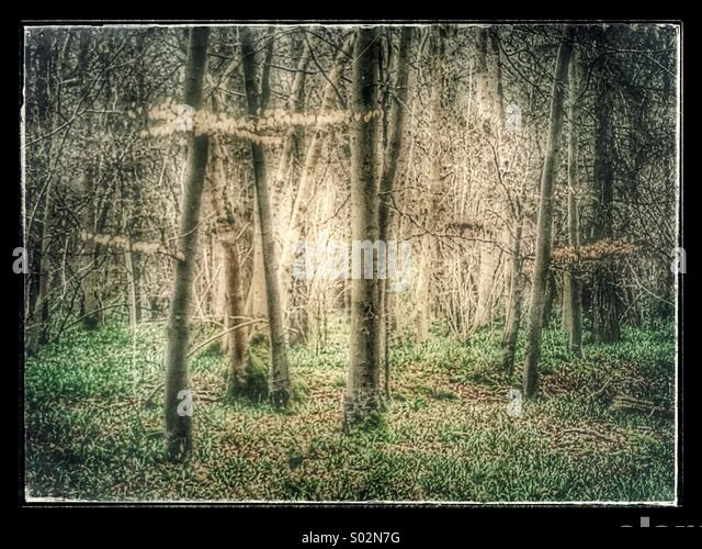 Atmospheric Ancient British woodland - Stock-Bilder