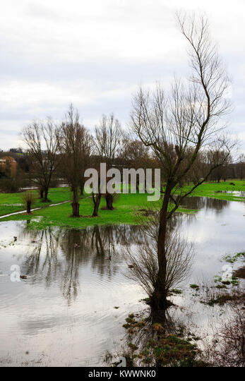 Trees on a flooded floodplain, Mülheim an der Ruhr, Germany - Stock Image