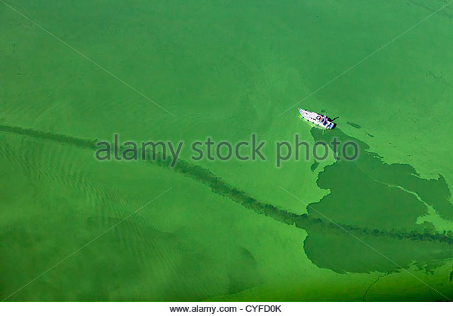 The Netherlands, Maastricht, Cyanobacteria or blue-green algae colour the water green in this lake, Yacht. Aerial. - Stock Image
