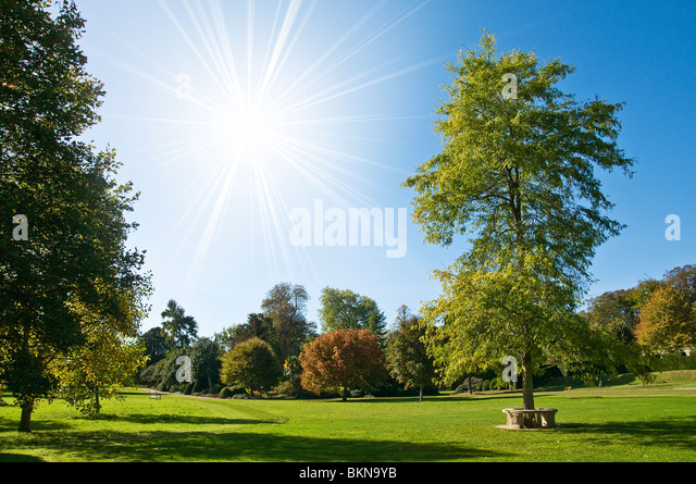 Summer park - Stock Image