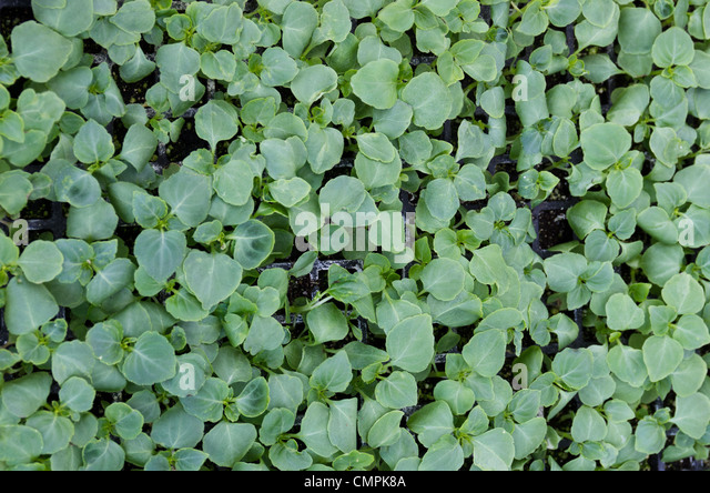 Sprouts grow house stock photos sprouts grow house stock for Topsoil 08094