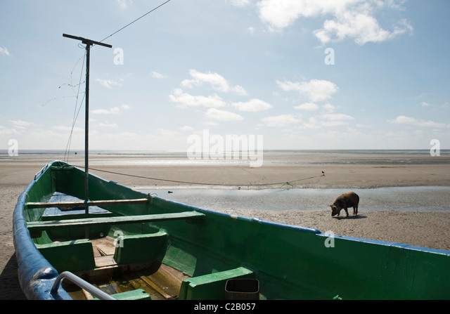 South America, Amazon, boat stranded on beach, pig in background - Stock Image