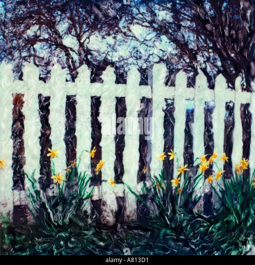 White picket fence with daffodils growing along it Polaroid sx 70 manipulated photograph - Stock Image