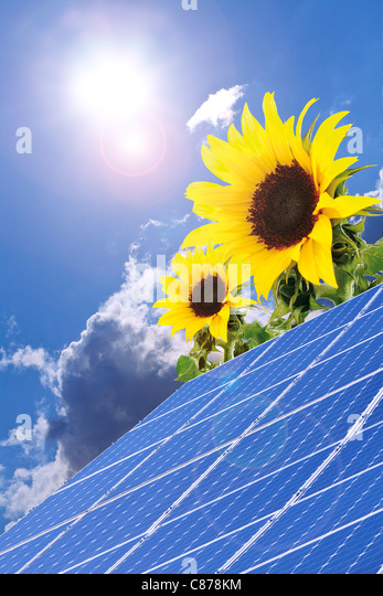 Germany, Cologne, Solar panels with sunflowers against blue sky and sun - Stock Image