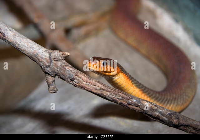 Nerodia Stock Photos & Nerodia Stock Images - Alamy