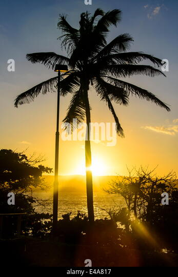 Backlit palm tree in the Fortress of Fortaleza San Felipe, Puerto Plata, Dominican Republic, West Indies, Caribbean - Stock Image