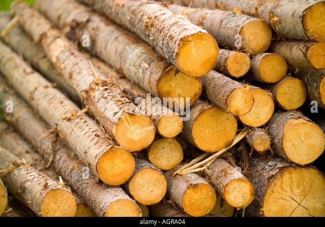 Stacked Tree Logs near Torsby in Varmland County Sweden - Stock Image