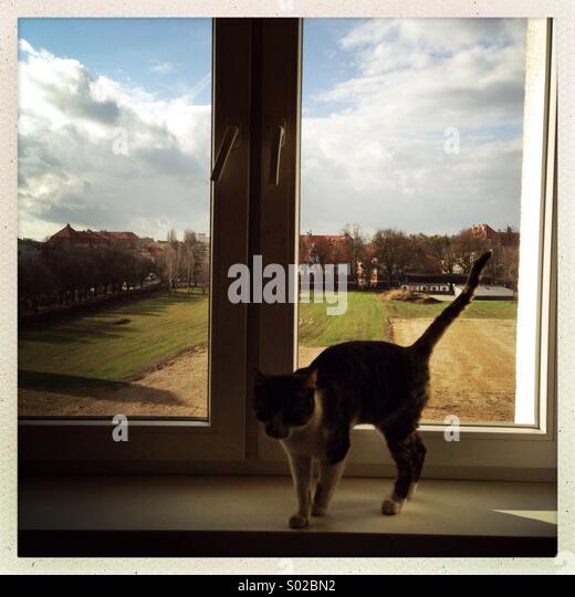 A cat is seen in a window sill. - Stock Image