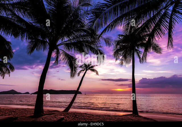 Holiday background made of palm trees silhouettes at sunset. - Stock-Bilder