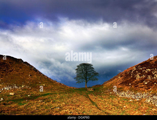 A view of Sycamore Gap in Hadrian's Wall. - Stock-Bilder