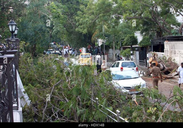 Chennai police personnel remove uprooted trees that came in the path of Cyclone Vardah, in Chennai, India December - Stock-Bilder