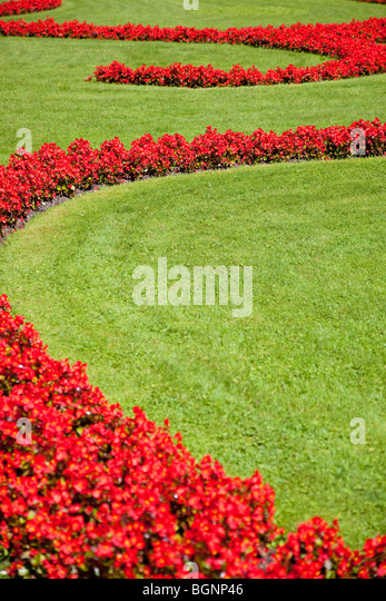 Lawn with flowers. Nature background. - Stock Image
