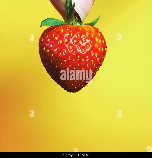 A close-up shot of female fingers holding a single strawberry against a yellow background. - Stock-Bilder