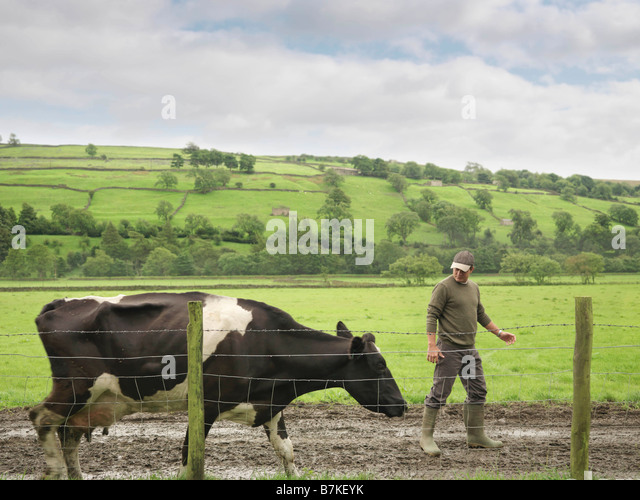 Farmer With Cow - Stock Image