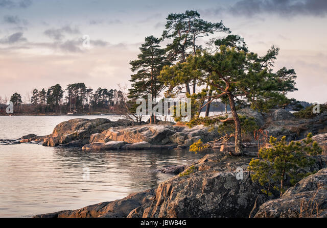 Landscape with nice morning light and pine trees in coastline, Finland - Stock Image