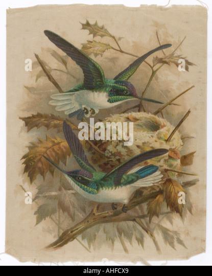 Humming Bird Silk Print - Stock Image