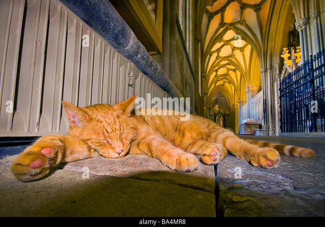 Wells Cathedral cat somerset england nap napping sleeping - Stock Image