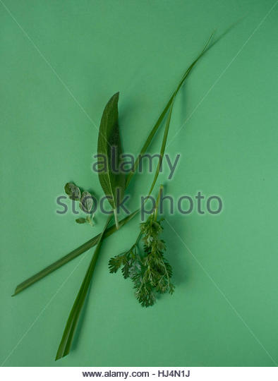 Green Herbs - Stock Image