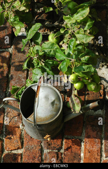 Aluminium Watering Can - Stock Image