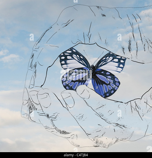 Cupped hands holding butterfly - Stock Image