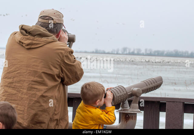 Man and boy look out telescope at birds - Stock Image