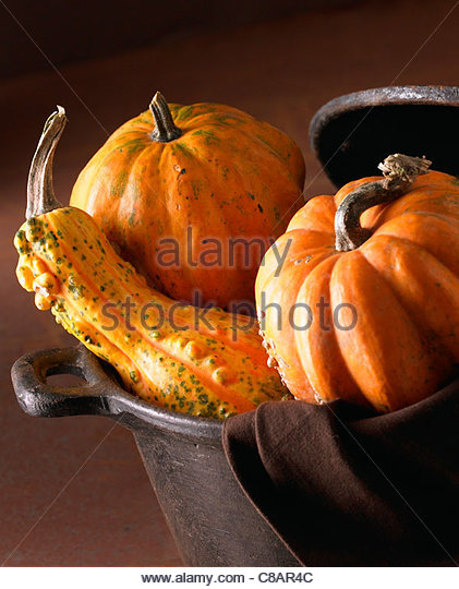 Assorted pumpkins and squash - Stock Image