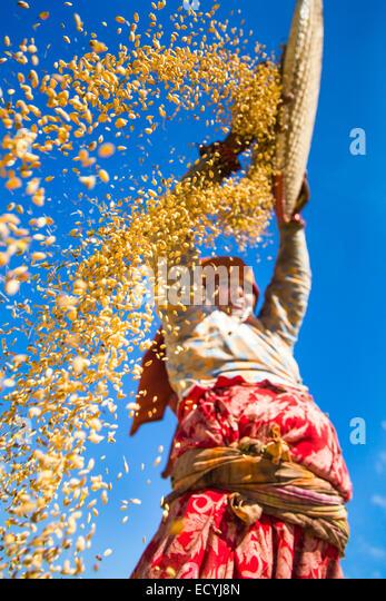 Farmer sifting grain near Kathmandu, Nepal - Stock-Bilder