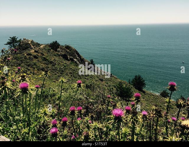 Thistles, path and overlook - Stock Image