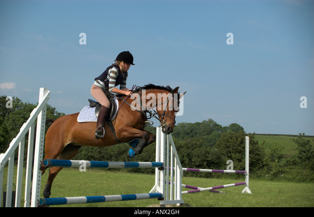 Horse and Rider Show Jumping - Stock Image