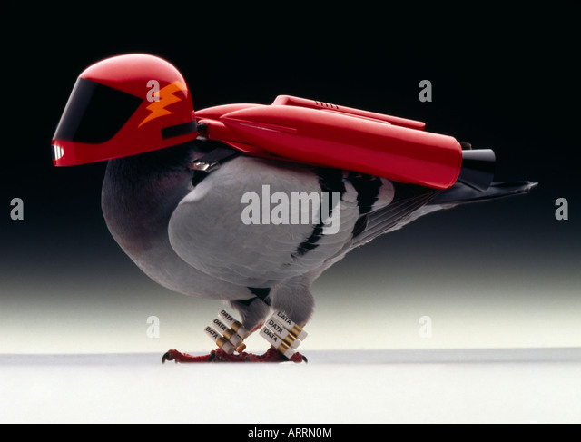 Turbo fueled carrier pigeon - Stock Image