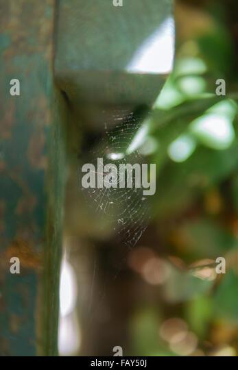 Cobweb under a wooden bar in a garden. - Stock Image