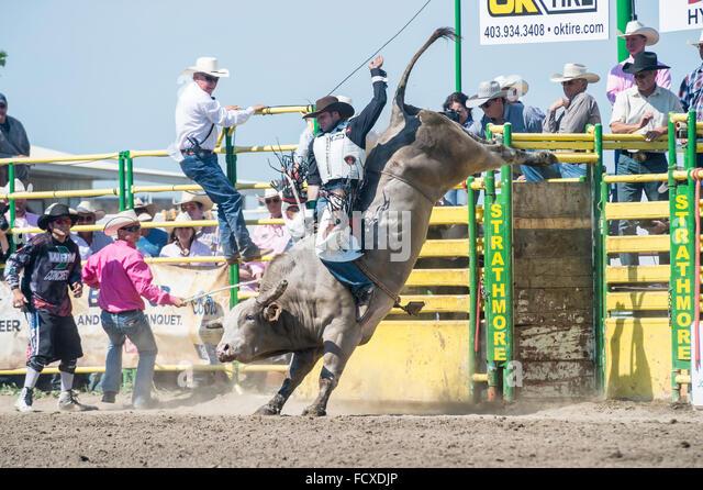 Cowboy bull riding, Strathmore Heritage Days, Rodeo, Strathmore, Alberta, Canada - Stock Image