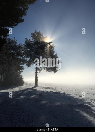 Winter Wonderland - Stock-Bilder