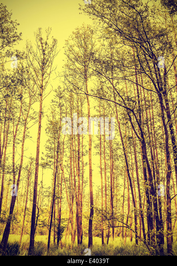 Peaceful nature vintage background. - Stock Image
