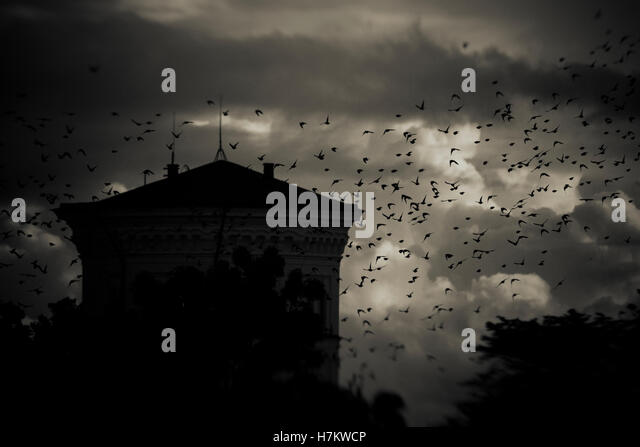Flock of birds flying past building at night with storm clouds in the background. Dark, moody and spooky setting - Stock-Bilder