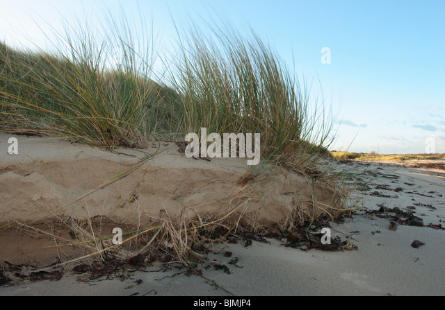 beach dune erosion essay Weathering, erosion, deposition study guide  sand dune sand deposited by wind till deposited rock material by ice landslide fast moving sediment downhill  hi, i am jennyfer from phd essay hi there, would you like to get such a paper how about receiving a customized one.