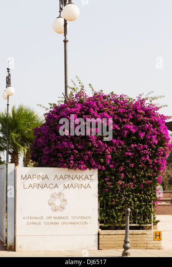 Sign at entrance to the marina, with Bougainvillea bush. Larnaca, Cyprus. - Stock Image