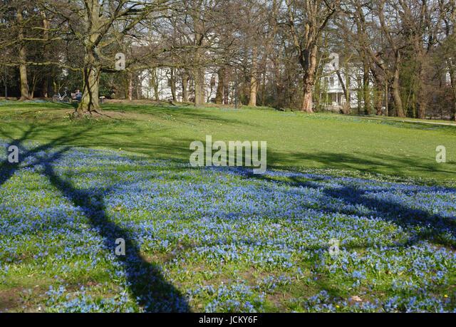 Flower Maedow and Trees Shadows in Park Wallanlagen in Spring , Bremen, Germany, Europe - Stock-Bilder