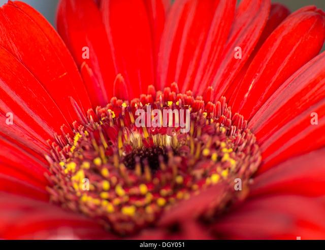 Macro shot of flowers - Stock Image